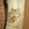 Le banc fustier : Loup sur noyer