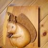 Le banc fustier : Ecureuil en arolle