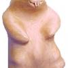 Le banc fustier : Grosse marmotte en arolle